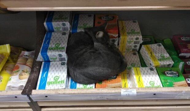 Кот в одесском магазине, фото: Telegram