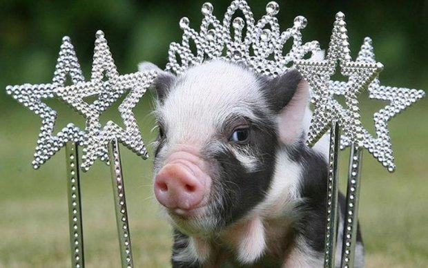 Опасно для жизни: почему полмира не едят свинину