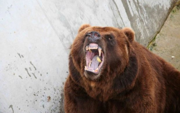 Дедуля-кунгфу: пенсионер дал мастер-класс медведю