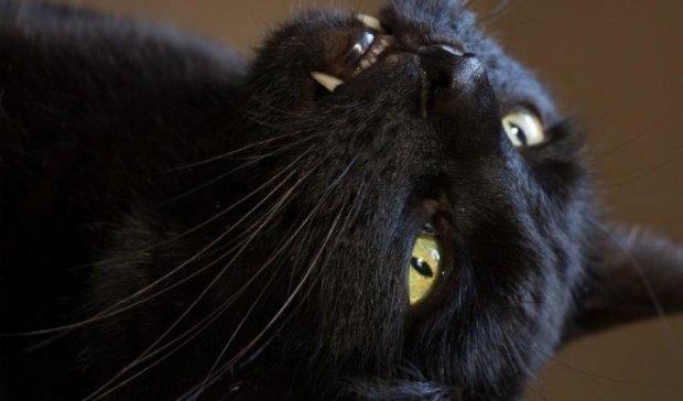 """Кіт спровокував """"кінець світла"""" у Карелії"""
