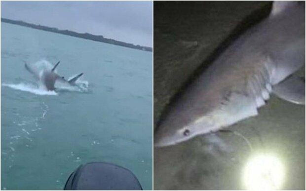 Мужчина поймал на удочку акулу, фото: Daily Mail