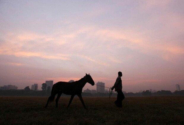 Чоловік з конем, скріншот: YouTube