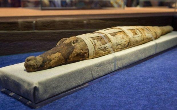 Археологи знайшли мумію гігатнського крокодила