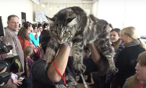 """Під """"карантинну облаву"""" поліції потрапили навіть коти"""