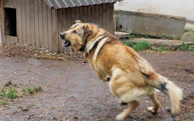 Мужчина спустил пса на копов: есть пострадавшие