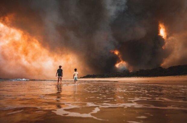 В Австралії після потужних пожеж почали розмножуватись пекельні павуки