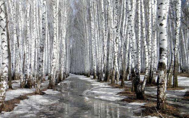 Погода в Украине: 30 января потепелеет, дождь, на западе со снегом