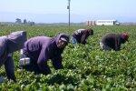 заробітчани у Польщі, фото Pxhere