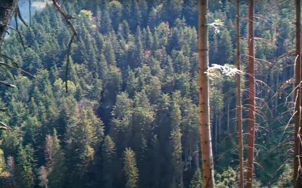 Закарпатський ліс, скріншот з відео