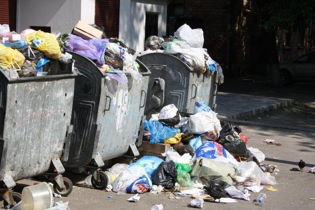 Львов тонет в мусоре, вонючие отходы портят воздух и нервы, - кадры тотального свинства