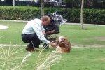 Собака в коляске, фото Facebook