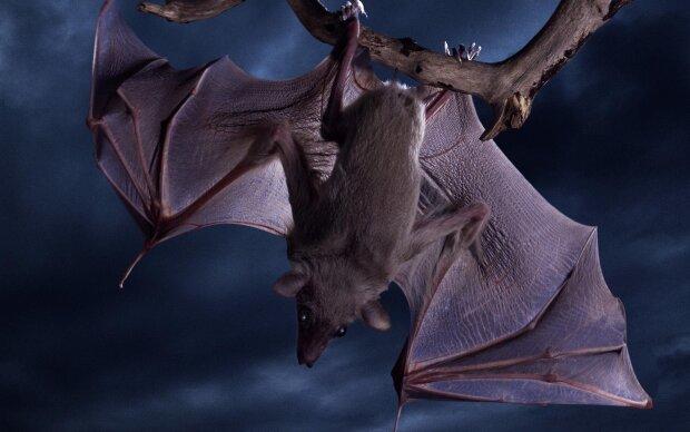 Цілі колонії кажанів атакують киян: що робити, якщо вони обрали вас