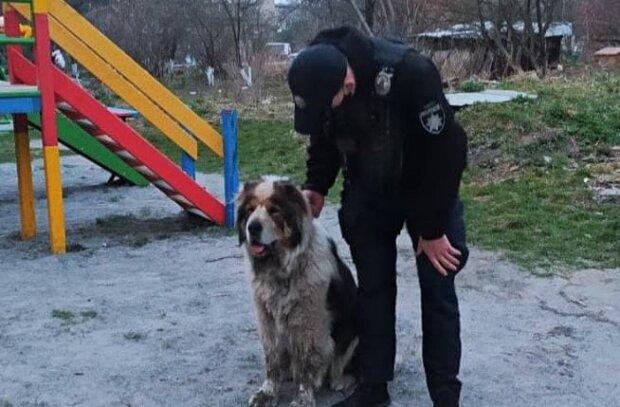 Собака / фото: Патрульная полиция