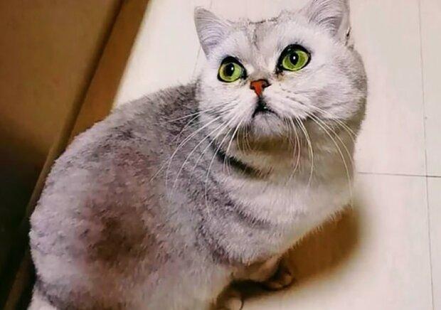 Кошка в Ухани, фото: Соцсети