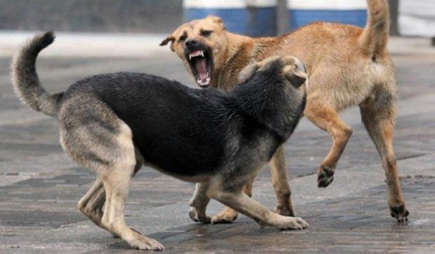 Стая бродячих собак покусала маленькую харьковчанку