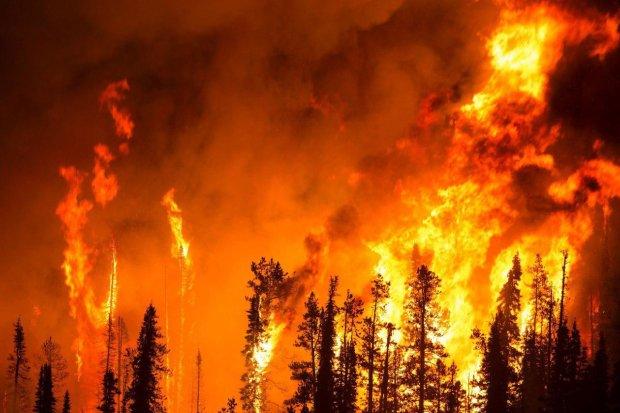 У Тернополі розбушувалася вогняна стихія: по околицях гуляє чорний дим, полум'я скоро перекинеться на житлові райони