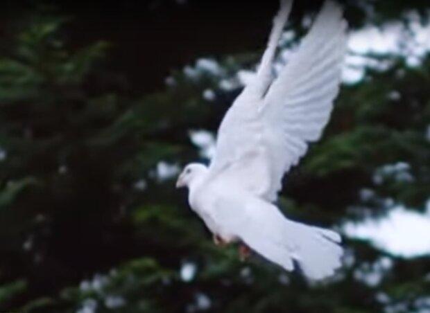 Скрин, видео YouTube птица