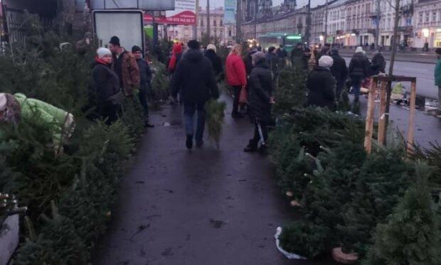 """У Львові продавці ялинок """"захопили"""" велодоріжки, ні пройти ні проїхати: """"Потерпіть заради свята!"""""""