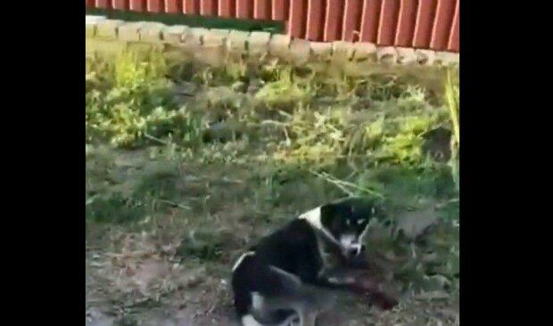 Под Днепром живодер приковал несчастного пса к машине и дал по газам