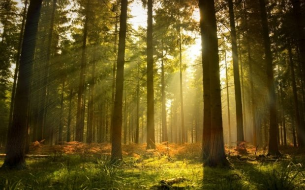 Христина Юшкевич: обсяг відтворення лісів у 2017 році становитиме понад 50 тис. га