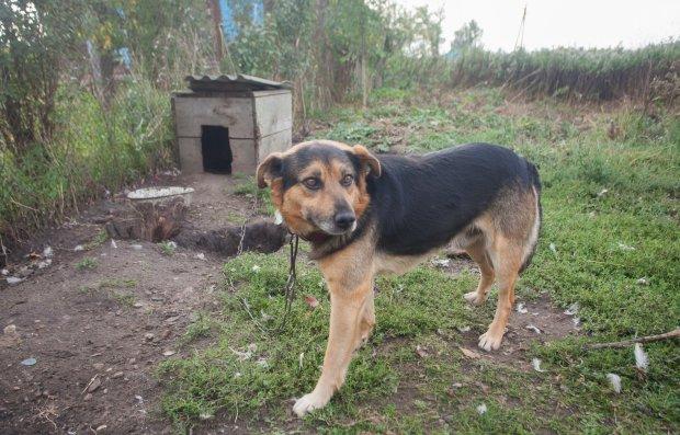 На Чернігівщині додумалися завести хижака замість пса: зоозахисники б'ють на сполох