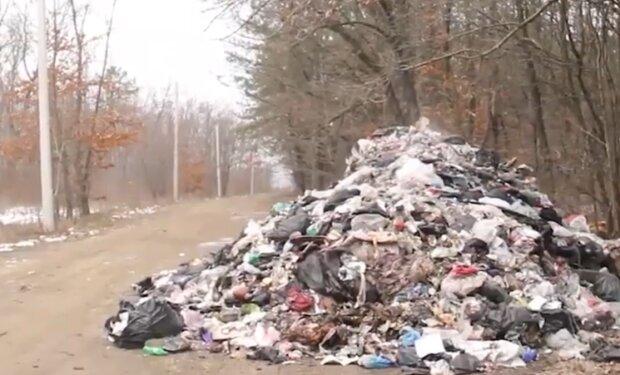 Сміття у лісі, скріншот із відео