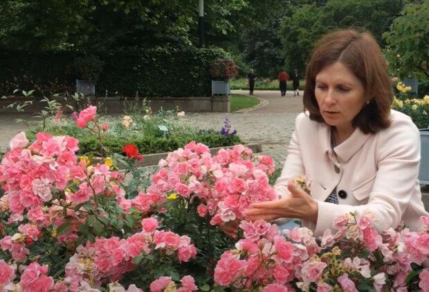 Розы зацвели, скриншот с видео
