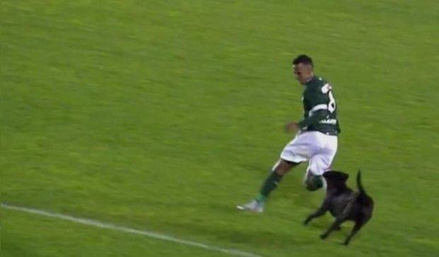 """Як бразильський футболіст від чотирилапого """"уболівальника"""" рятувався (відео)"""