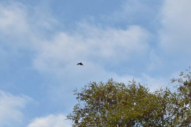 Летюча миша, фото: Галицький національний природний парк