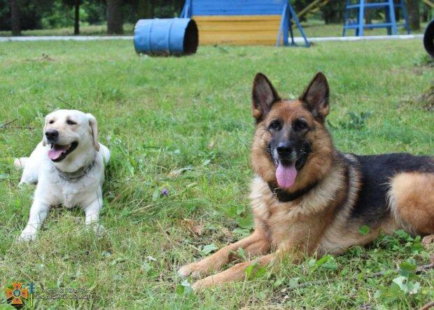 служебные собаки, фото: ГСЧС