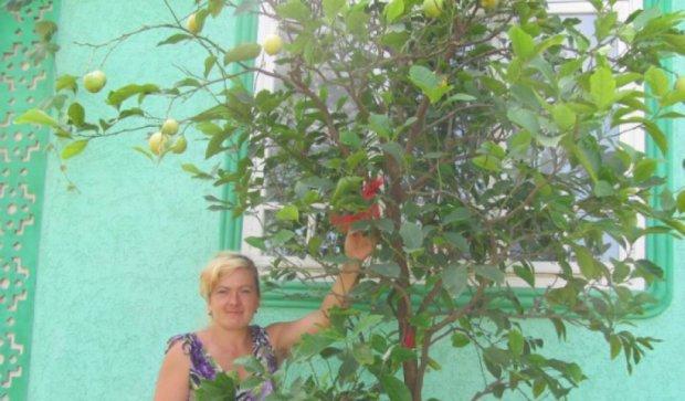 Жителька Буковини виростила триметровий лимон