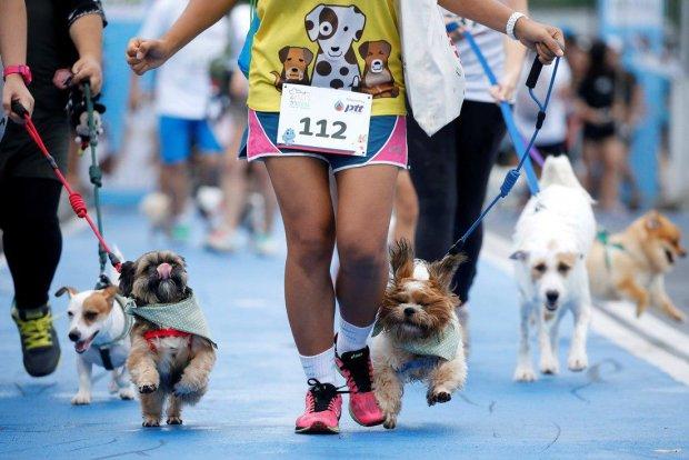 Спортсменка подобрала брошенного щенка и пробежала с ним 12 километров: трогательное видео
