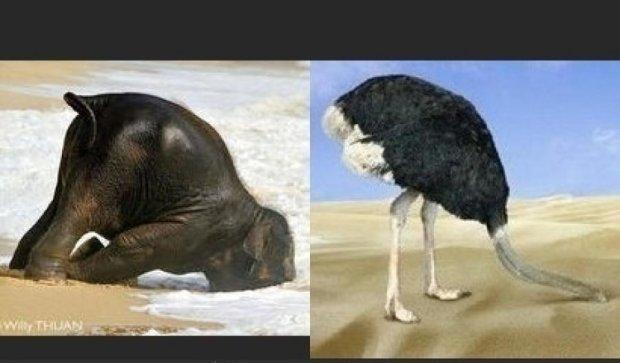 Мережу підкорив страус, який уявив себе слоном