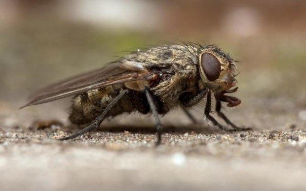 Дівчина змогла привернути до себе увагу завдяки мухам