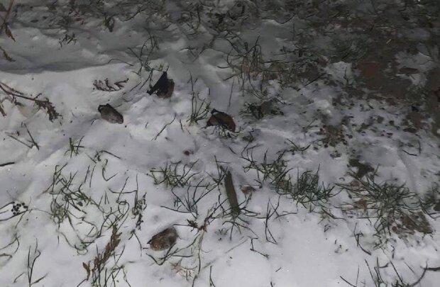 """Нелюди викинули на лютий мороз сотню тварин з Червоної книги: """"Коли неуки зрозуміють?"""""""