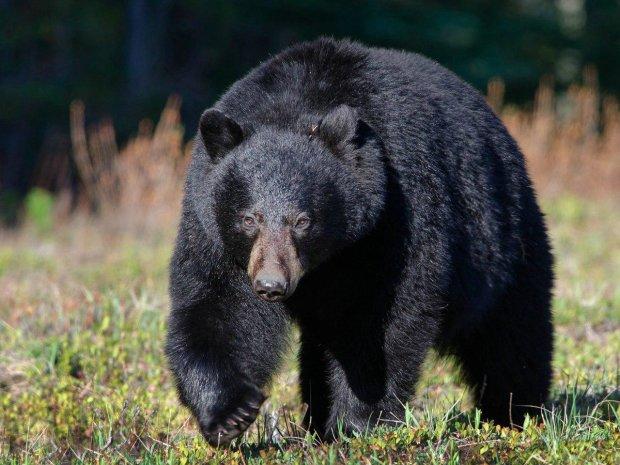 Опасный медведь спас маленького мальчика от страшной смерти: трогательная история настоящей дружбы