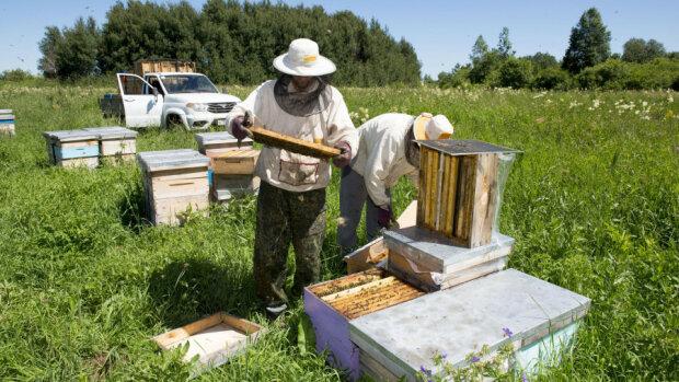 Пчелы зажалили: тяжело больная львовянка встали на ноги после экстремального лечения