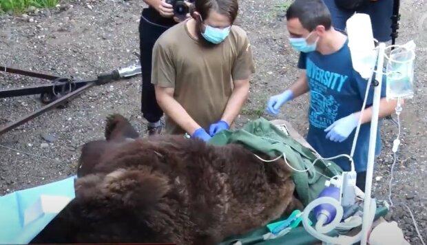 Медвежье лечение, скриншот