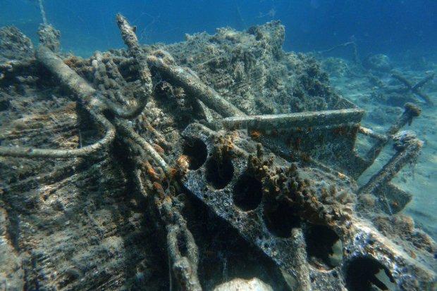 Неизвестных науке существ удалось снять на дне океана