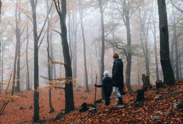 Осінь в лісі, скріншот: YouTube