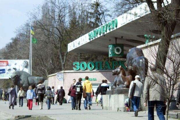 """В Киевском зоопарке пополнение, посетители в восторге, - """"какие милашки!"""""""