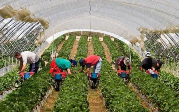 Побої та насилля: в якому пеклі доводиться жити українським заробітчанам