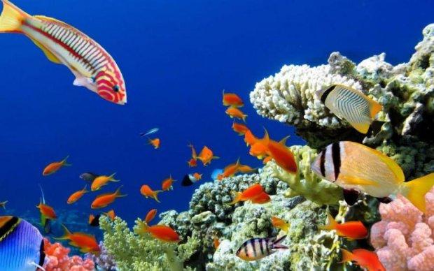Таємниця загадкових глибин: вчені виявили в Тихому океані нове життя