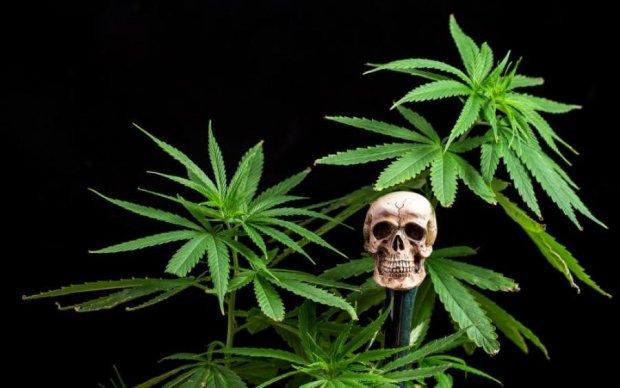 Легалізація марихуани в Україні: хто категорично проти