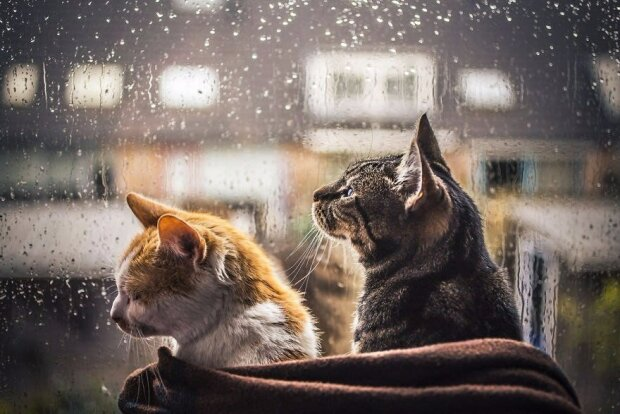 Дождь и котики, Пикабу