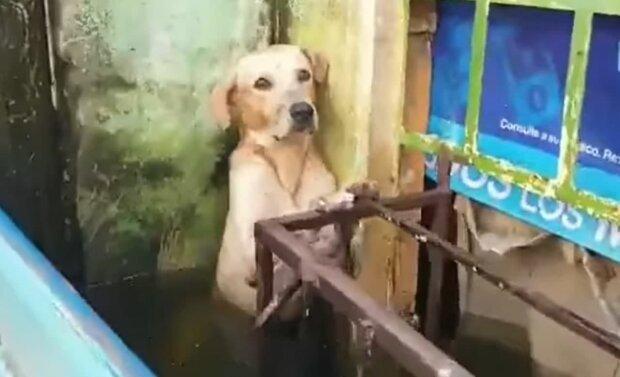 моряки врятували собаку, скріншот з відео