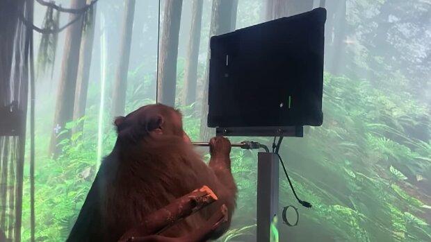 Мавпа / скріншот з відео