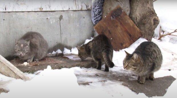 вуличні коти, скріншот з відео