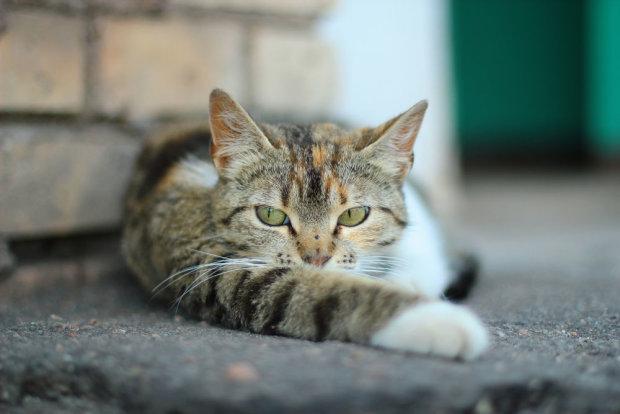 Коту не сподобався новенький асфальт у Миколаєві: відео