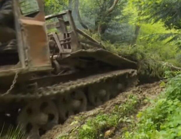 Вырубка леса, скриншот видео